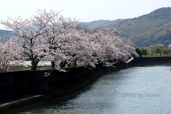 DSC03718sakura.jpg