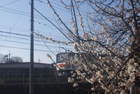 梅と武蔵野線