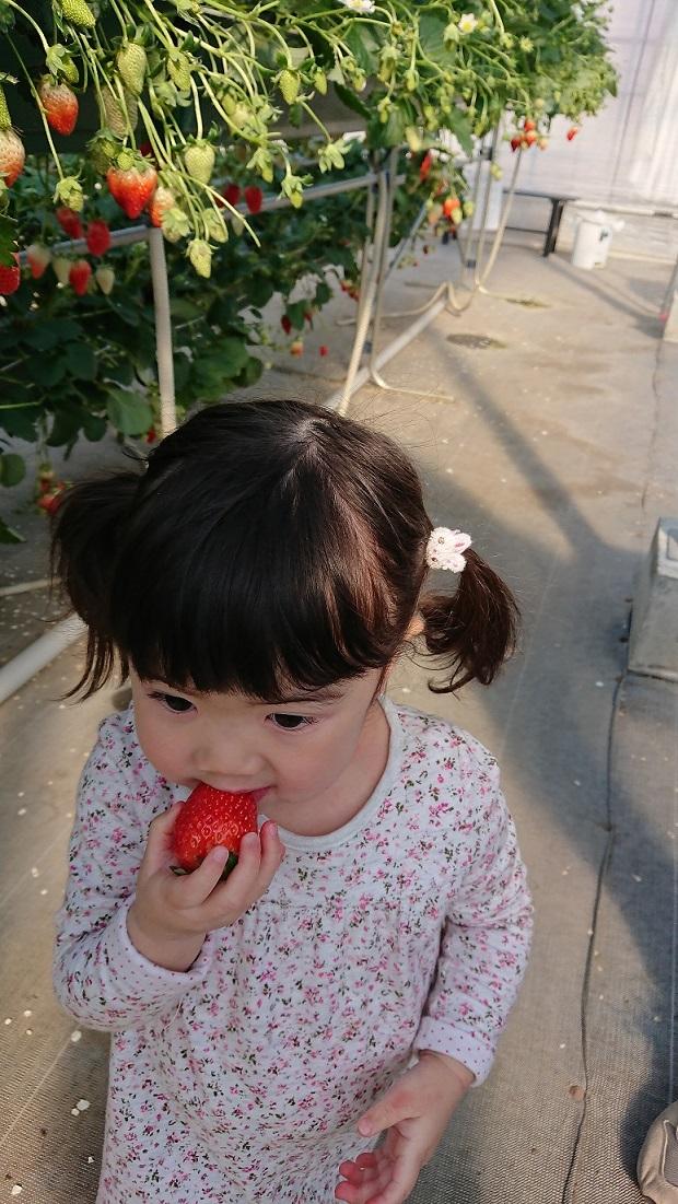 初めてのイチゴ狩りへ♪4.JPG