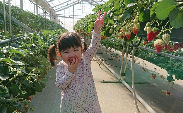 初めてのイチゴ狩りへ♪7.JPG