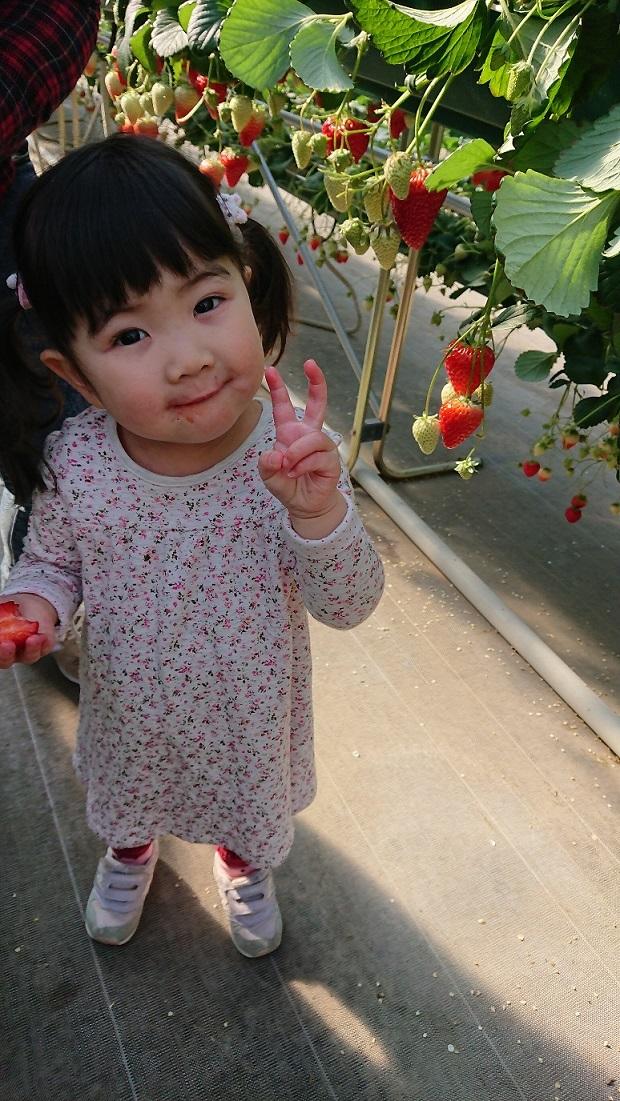 初めてのイチゴ狩りへ♪8.JPG