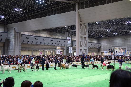 dogshyo201903 (2)