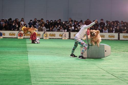 dogshyo201903 (3)