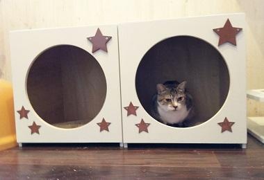 猫ハウス9