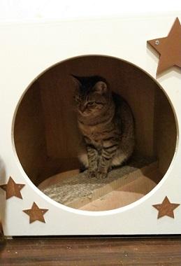 猫ハウス3