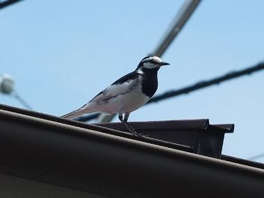11屋根の上に移動0512