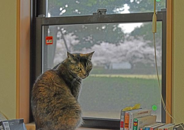 桜 DSF_4591