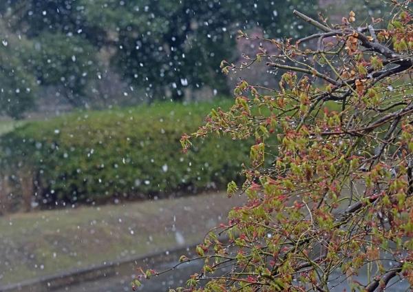 雪景色 DSF_4800