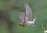 鳥撮りとりこ