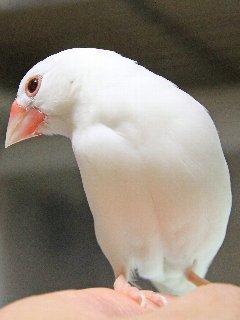 放鳥は嬉しいね~♪