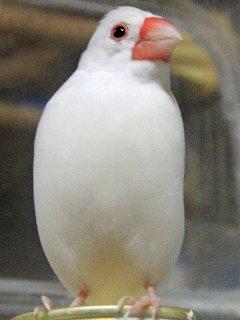 朝放鳥長いね~♪
