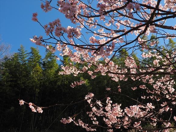 春めく-1_R