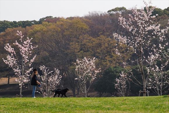 春の公園-1_R