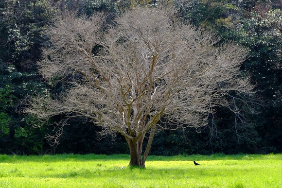 樹-1_R