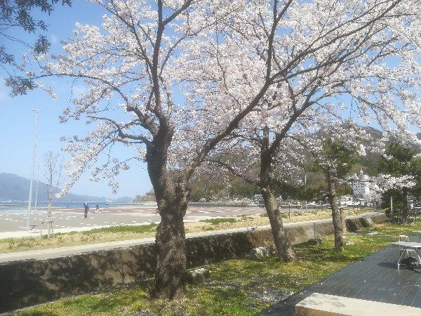 akasaki-sakura-005.jpg