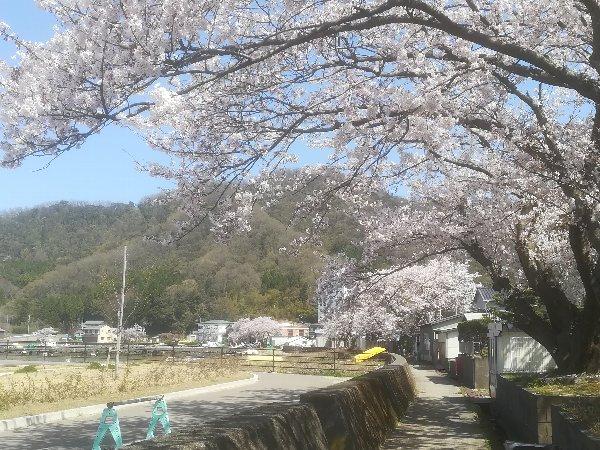 akasaki-sakura-008.jpg