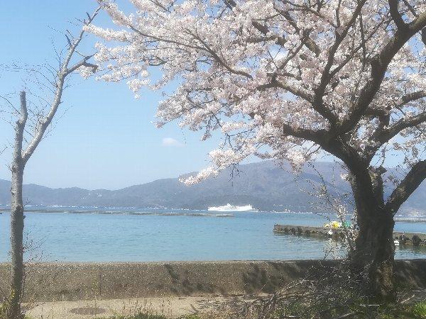 akasaki-sakura-014.jpg