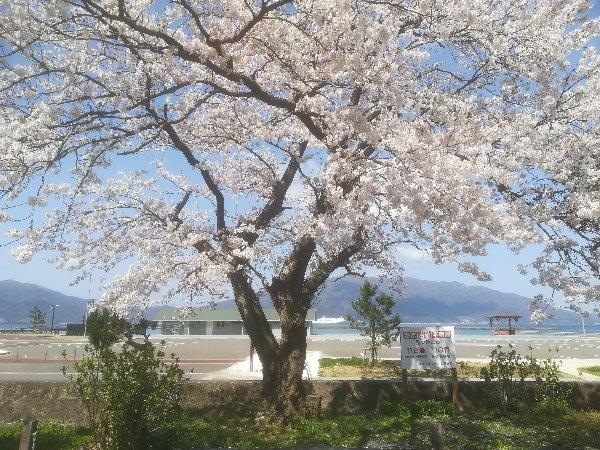 akasaki-sakura-027.jpg