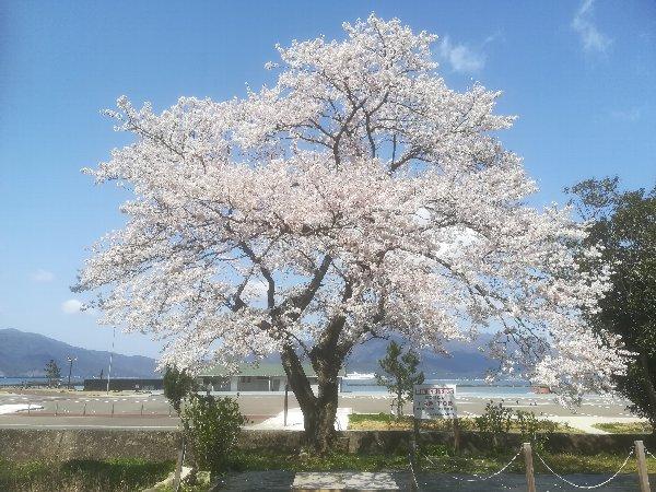 akasaki-sakura-029.jpg