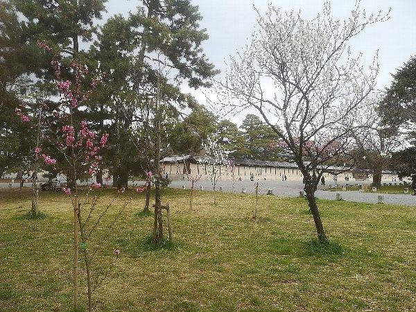 gosho-kyoto-268.jpg