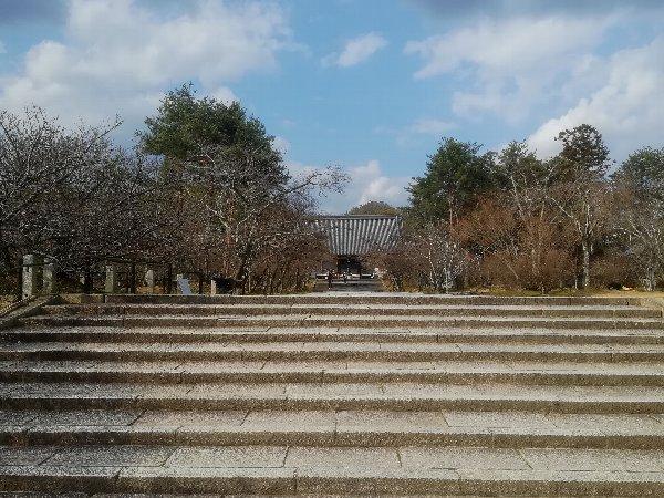 ninnaji-kyoto-076.jpg