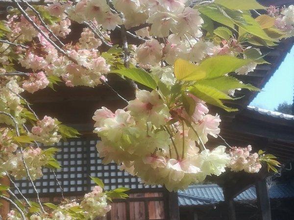 saifukugi2-tsuruga-062.jpg