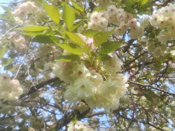 saifukugi2-tsuruga-064.jpg