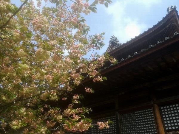 saifukugi2-tsuruga-068.jpg