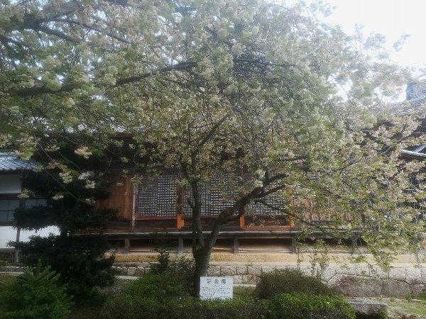 saifukugi2-tsuruga-078.jpg