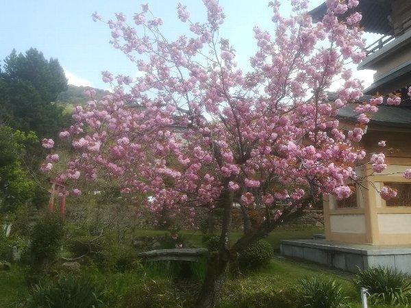 saifukugi2-tsuruga-098.jpg