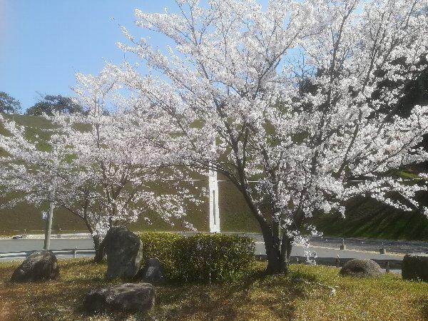 tau2-tsuruga-006.jpg
