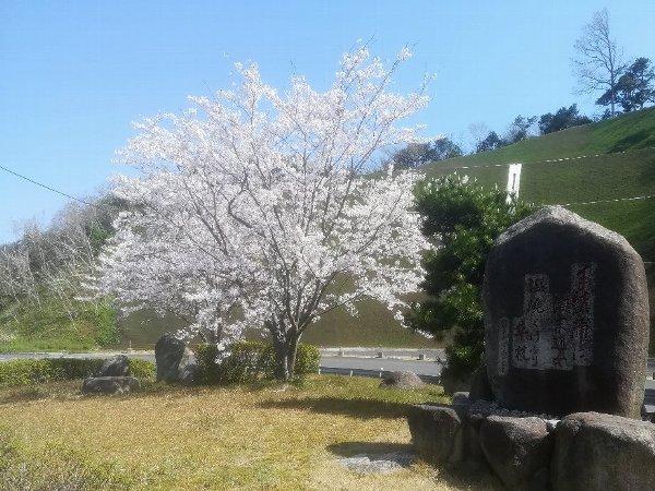 tau2-tsuruga-009.jpg