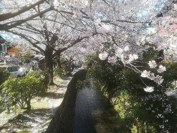 tetsugakunomichi-kyoto-001.jpg