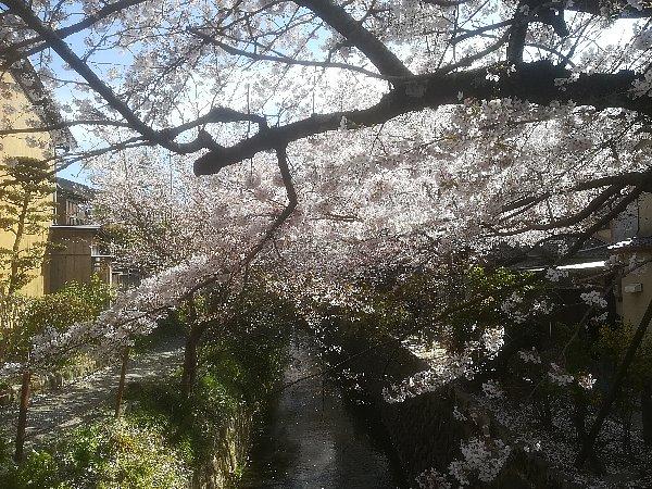 tetsugakunomichi-kyoto-003.jpg