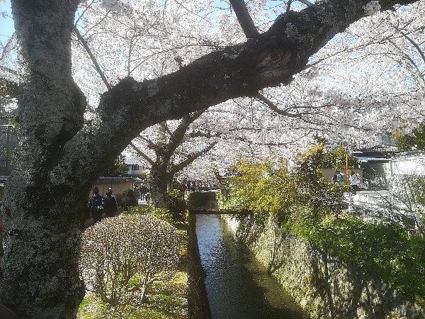 tetsugakunomichi-kyoto-015.jpg