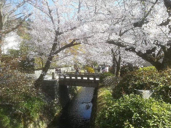 tetsugakunomichi-kyoto-016.jpg