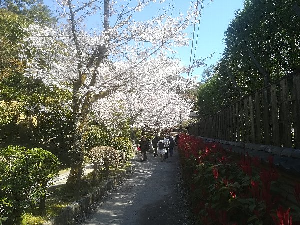 tetsugakunomichi-kyoto-023.jpg