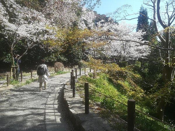 tetsugakunomichi-kyoto-025.jpg