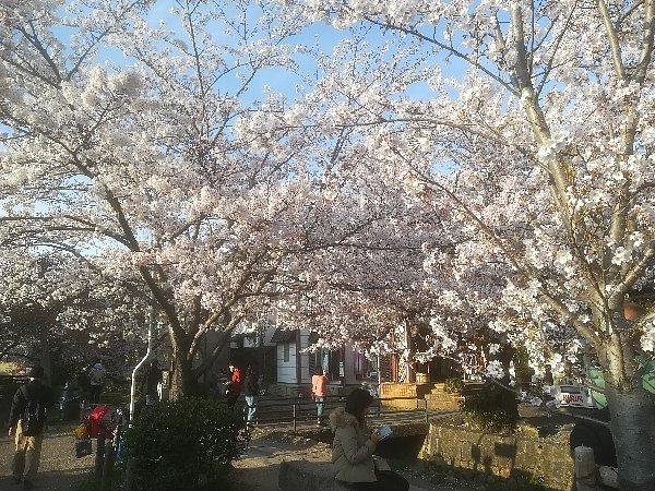 tetsugakunomichi-kyoto-082.jpg