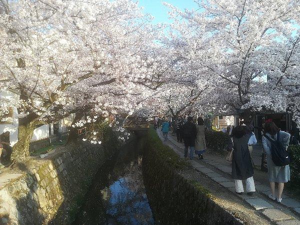 tetsugakunomichi-kyoto-084.jpg