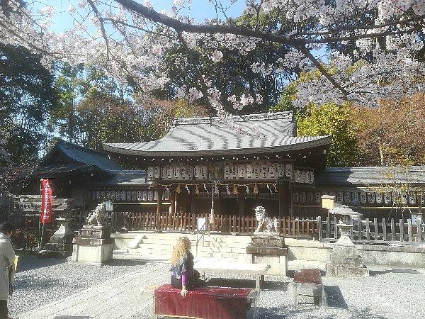 wakaoojijinjya-kyoto-016.jpg