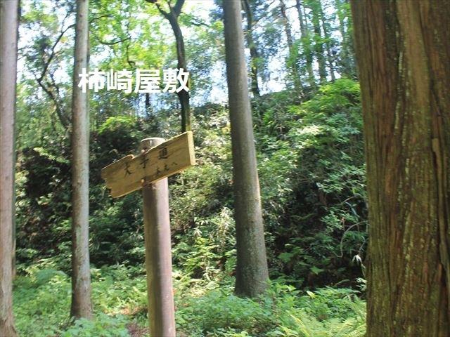 春日山IMG_3456
