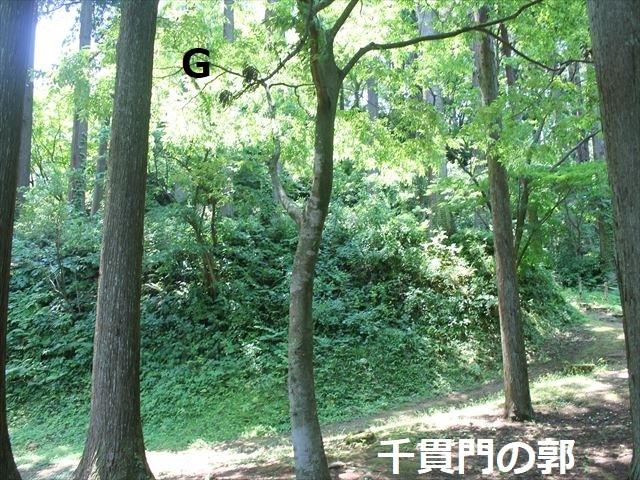 春日山IMG_3642