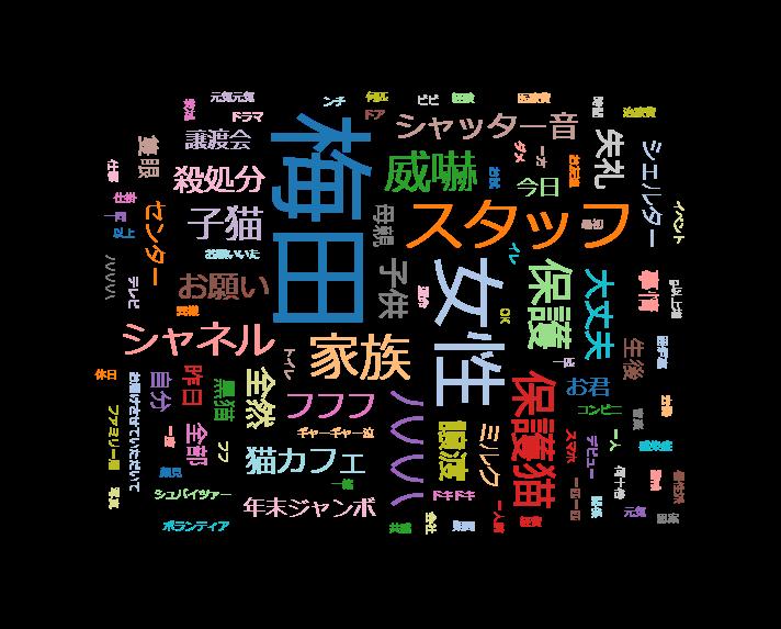 情熱大陸【梅田達也/行き場のない猫に新たな家族を見つける!