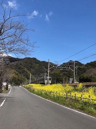 春焼津 (7)