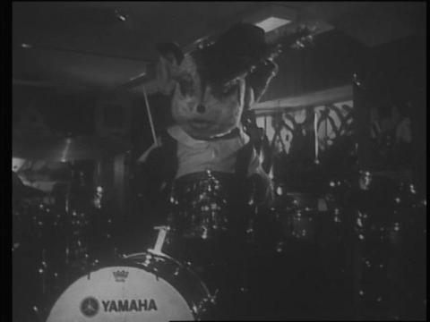 早朝から悪戯して、ドラムを叩くチャメゴン