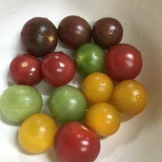 トマトカラフル
