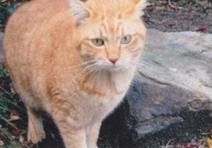 コウケントー 猫 タルト