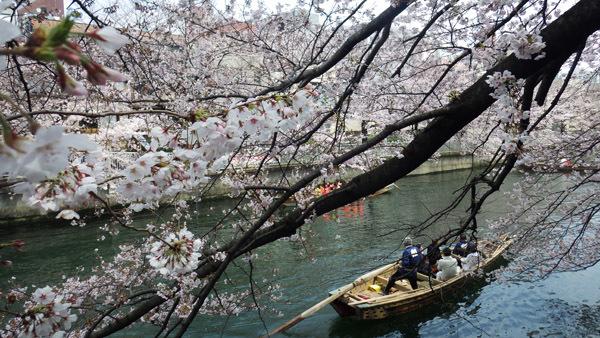 桜の下で 舟をこぐ