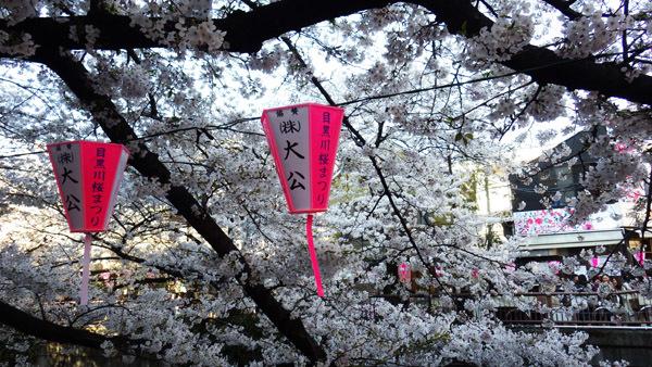 目黒川さくら祭